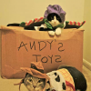 Cat Toy Story
