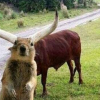 Squirrel Photobomb!