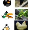 I personaggi reali di Angry Birds!