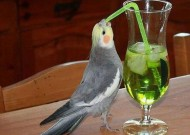 Un uccello che ama bere un cocktail al bar