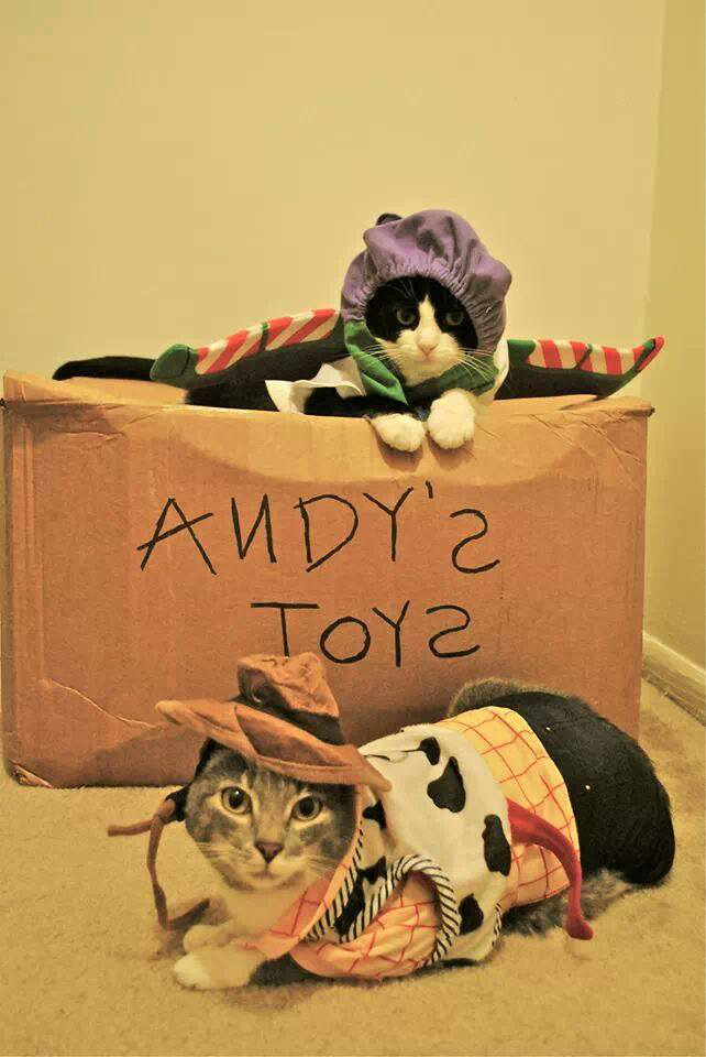 cat-toy-story
